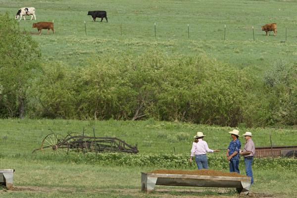 Pasture N8609
